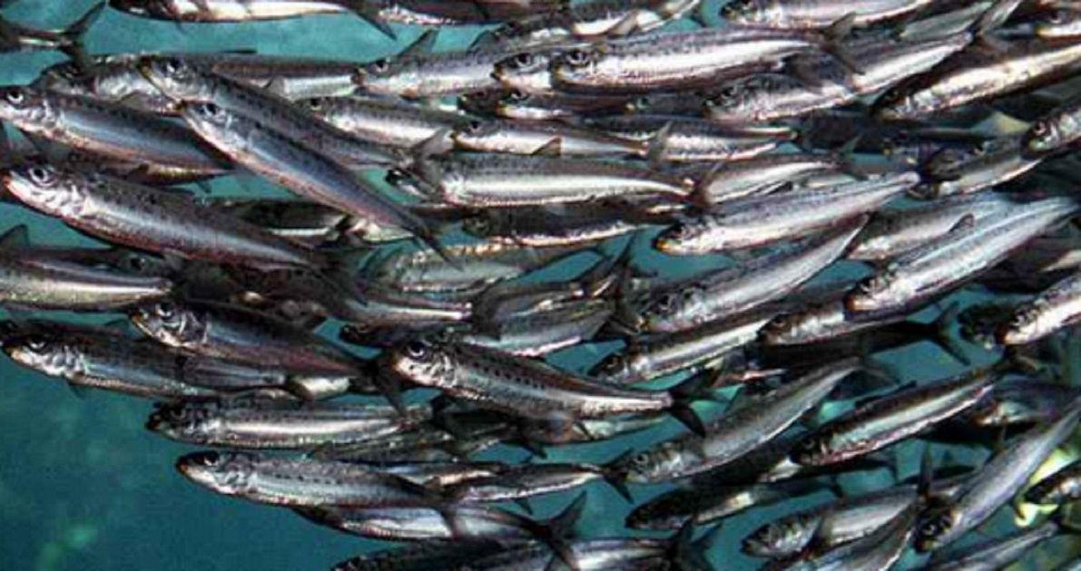 Il Distretto della Pesca e Crescita Blu sta sperimentando un nuovo tipo di ghiaccio per una migliore conservazione del pescato