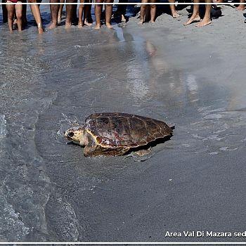 /images/4/5/45-wwf-liberazione-tartaruga--19-.jpg